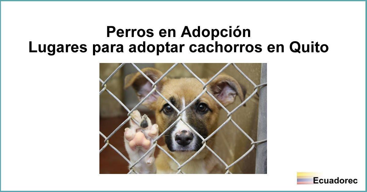 La imagen tiene un atributo ALT vacío; su nombre de archivo es adoptar-perros-cachorros-quito.jpg